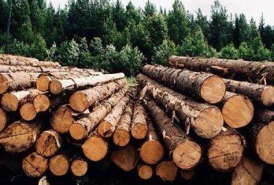 Заготовка леса и распиловка круглого